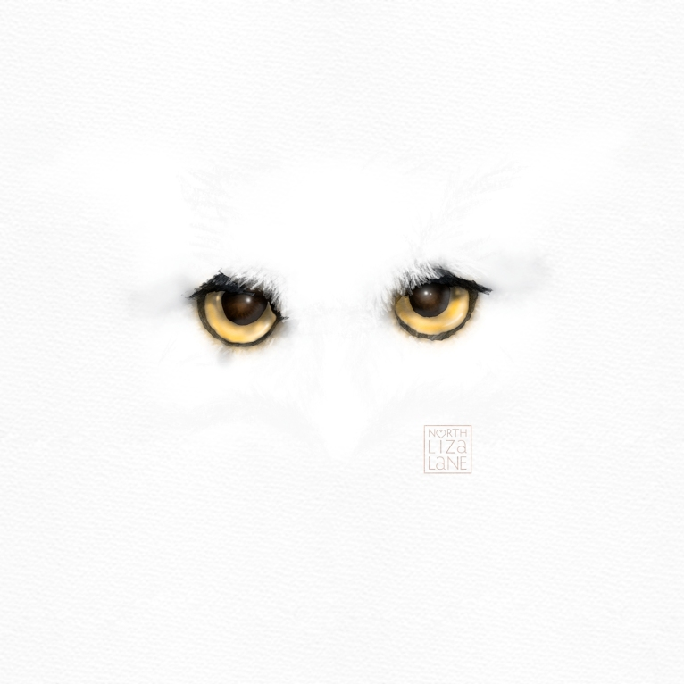 Detail - Night Owl 1