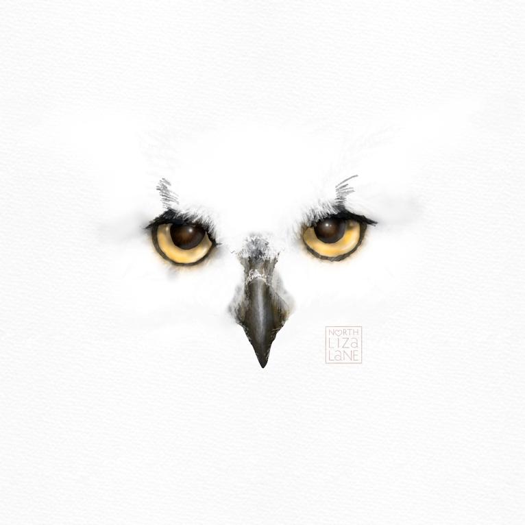 Detail - Night Owl 2