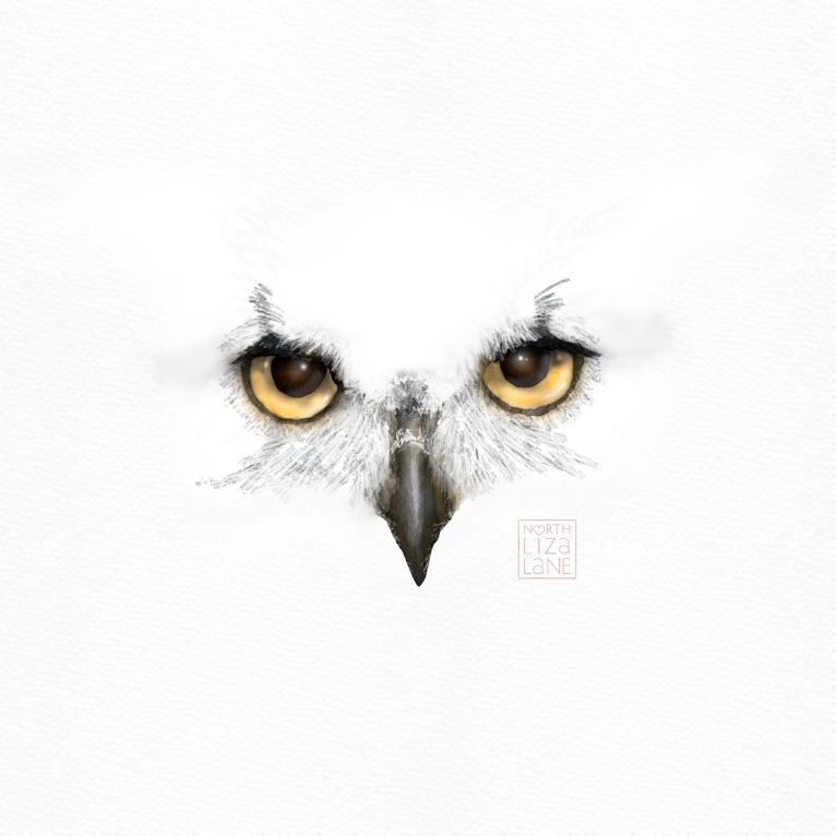 Detail - Night Owl 3