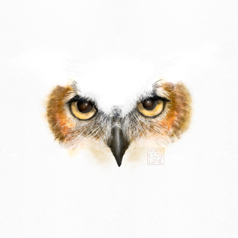 Detail - Night Owl 4