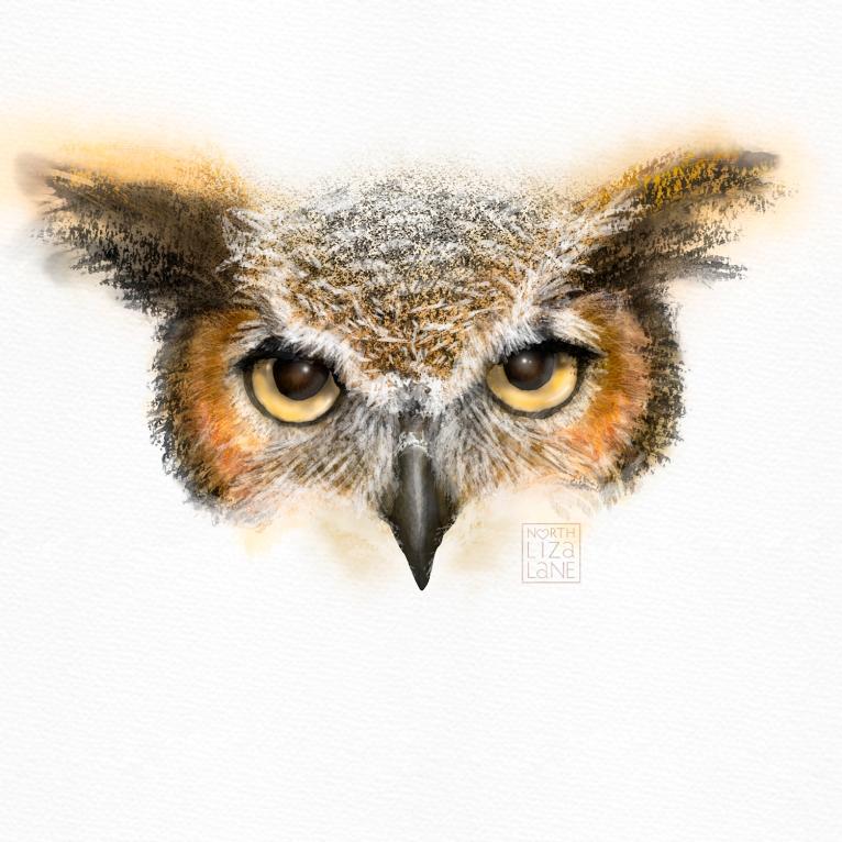 Detail - Night Owl 8