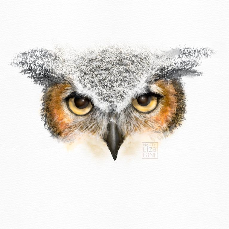 Detail - Night Owl 7