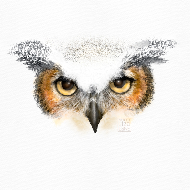 Detail - Night Owl 5