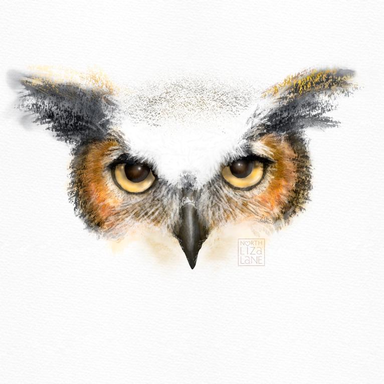Detail - Night Owl 6