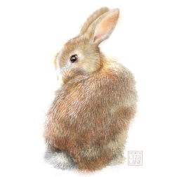 Study of Rabbit for OWLOWEEN Card.