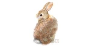 Study of Rabbit