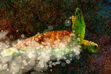 Sea Turtle Detail