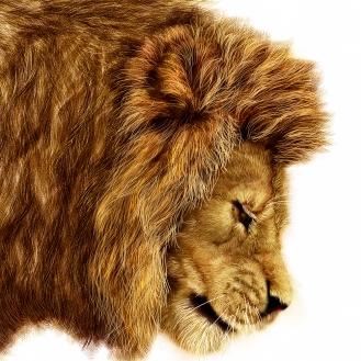 Lion Stage Three